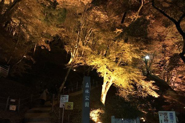 香嵐渓内側ライトアップ
