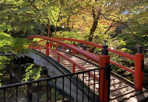 朝の河鹿橋①
