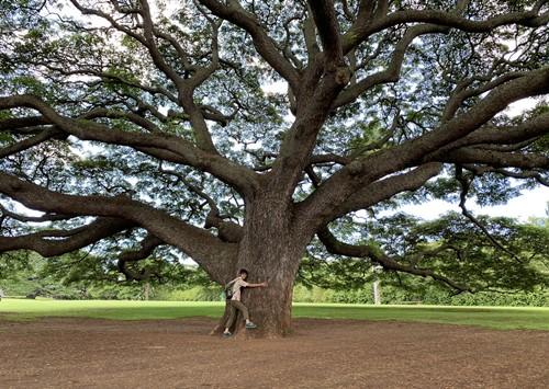 日立の樹の下
