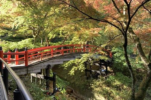 朝の河鹿橋②