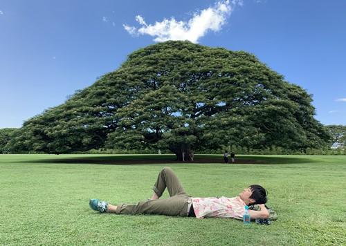 日立の樹で寝そべる