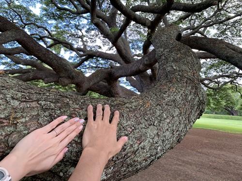日立の樹で結婚指輪