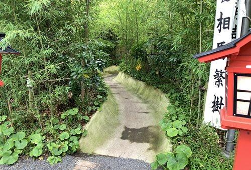 大楠への小道